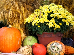 fall arrangement 1229576_97847309