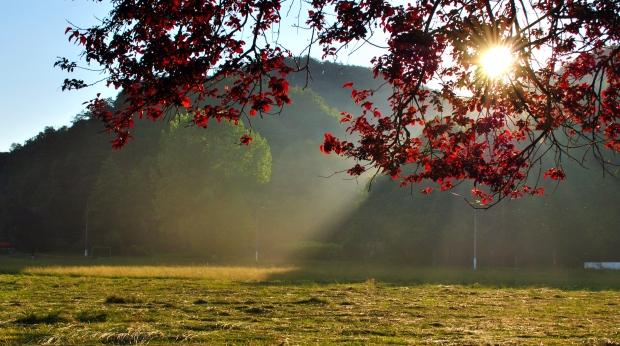 1359720_95566863 autumn tree stock xchng