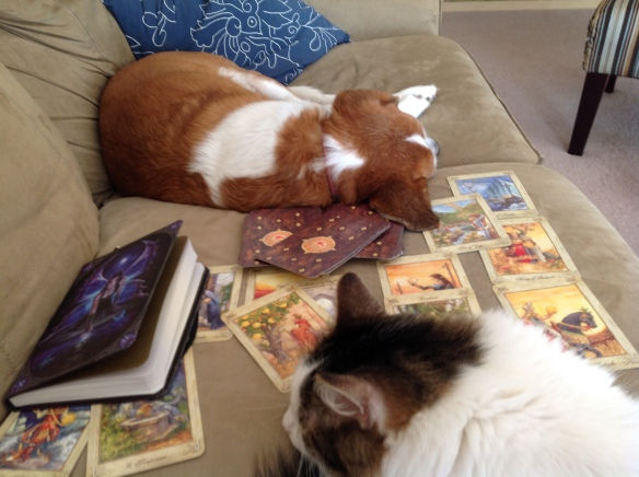 cat dog tarot cards